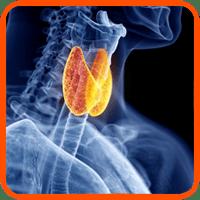 marco tiroides