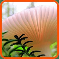 marco hongos medicinales
